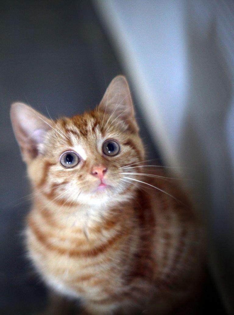 Anxious kitten cover