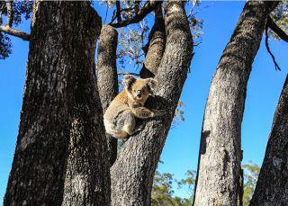 Australia: Earth's Magical Kingdom