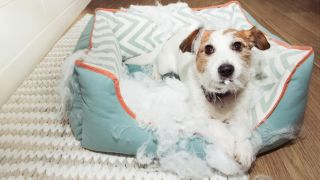 how to stop a dog chewing their bed
