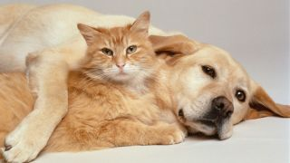 Diseases you could catch from your cat or dog: Dog and cat cuddling up to each other