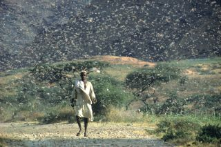A swarm of desert locusts can be seen in Ethiopia during an outbreak in 1968.