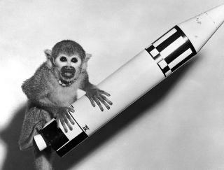 Baker, a female squirrel monkey, was photographed with a model rocket the day after she and Able took a historic suborbital flight.