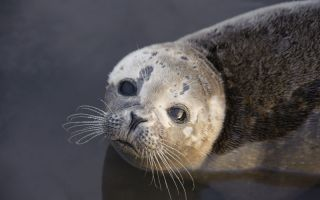 A new flu virus has killed harbor seal pups.