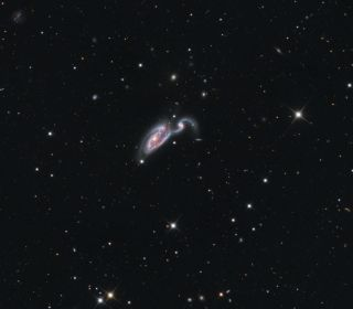 Heron Galaxy Skywatching Snyder