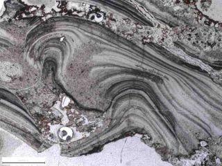 geyserite