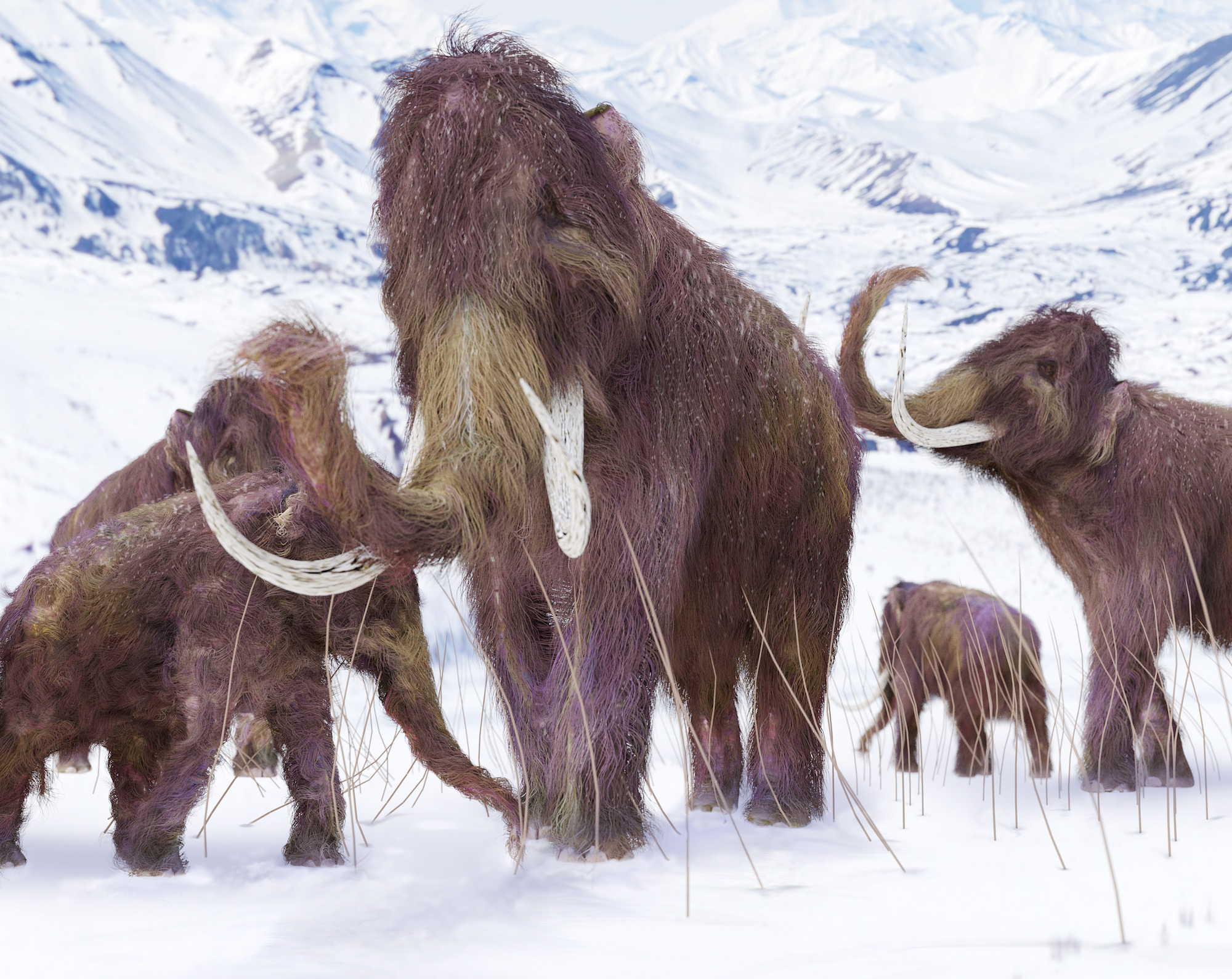 The last woolly mammoths on Earth had disastrous DNA | Live Science
