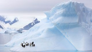 Gentoo and chinstrap penguins hang out on an iceberg Western Antarctic.