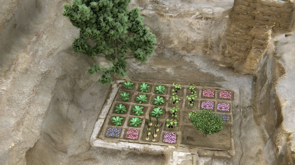 Ancient Funerary Garden Discovered in Egypt for First Time