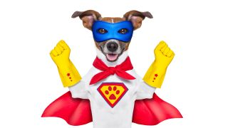 A dog dressed as a superhero wears a mask and cape.