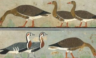 """Meidum Geese' was found in the Chapel of Itet in the tomb of Nefermaat and Itet."