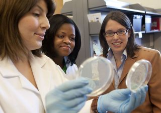 Erica Larschan (on the right) with her graduate students Marcela Soruco, left, and Jessica Chery, study cultures in the lab.