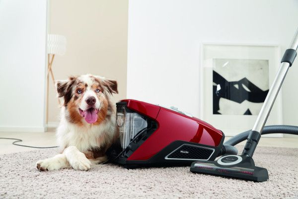miele vacuum - Miele 10661220 Blizzard CX1 Cat and Dog PowerLine Bagless Vacuum Cleaner - Real Homes