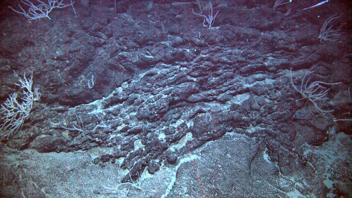 Photos: Hawaii's New Underwater Volcano   Live Science