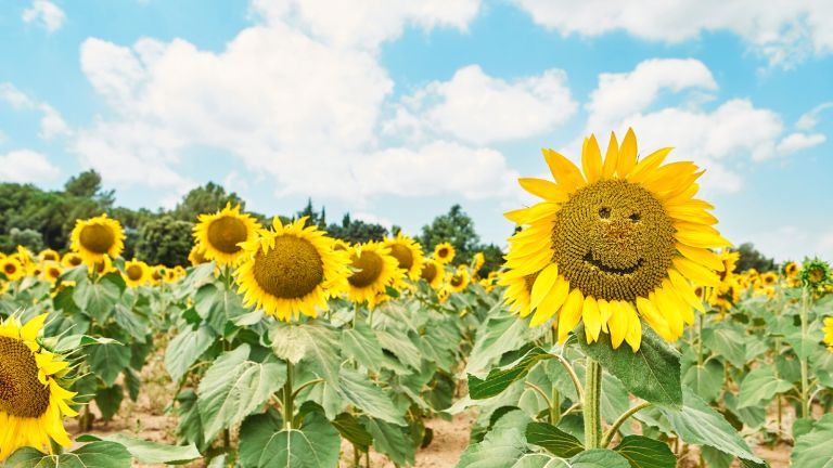 Wondering how to be happy? Get outside with sunflowers
