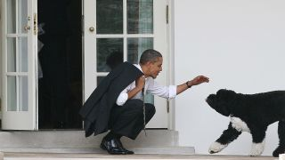 Former First Dog Bo greets Obama on the White House steps
