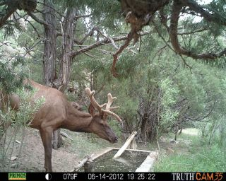 Elk at water tank