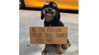 Dog with sign saying 'Be the person your dog thinks you are'