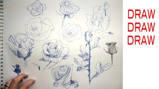 How to draw a rose: beginner and advanced tips