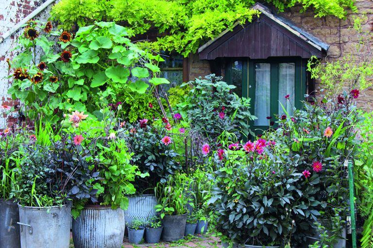 Arthur Parkinson's flower garden