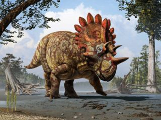 illustration of the horned dinosaur Regaliceratops
