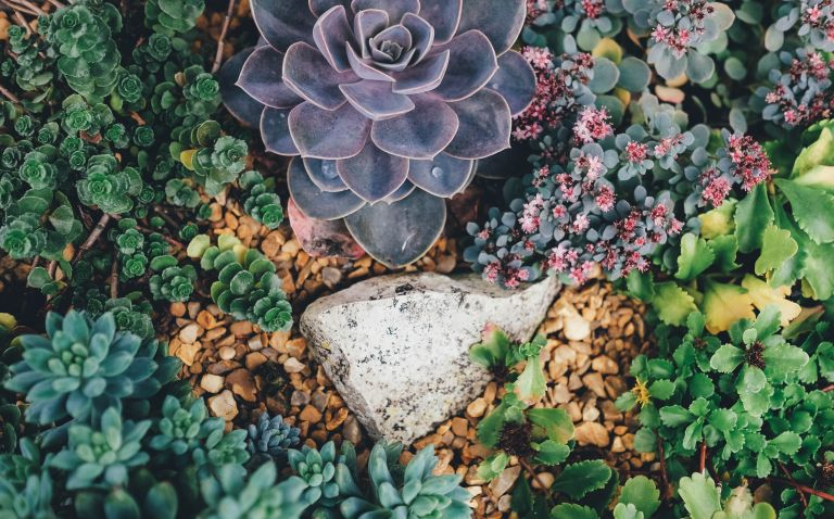 rock garden ideas: a rock garden by Annie Spratt