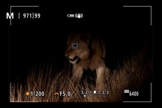 Canon EOS R5's Animal AF can track a lion's eyes –IN THE DARK!