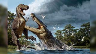 A Deinosuchus, an ancient crocodylian with banana-size teeth, lunges at an Albertosaurus dinosaur.
