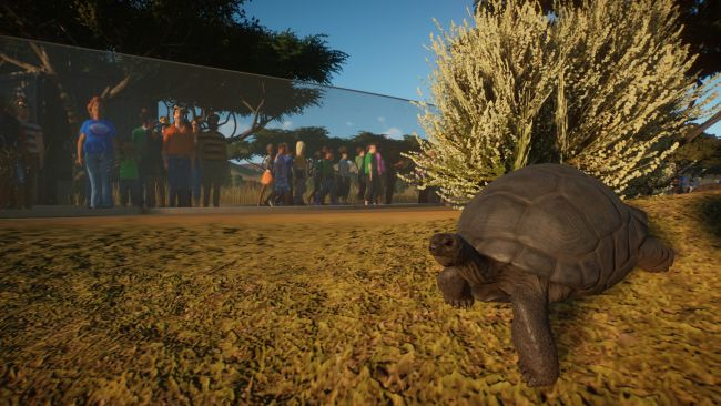 Planet Zoo beta: My turtles are sad and my hogs are horny