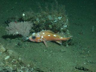 deep-sea-coral1-10702-02