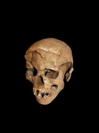 skull found at naturak
