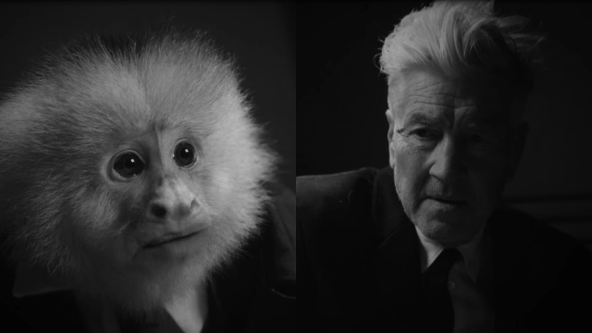 Image result for david lynch what did jack do