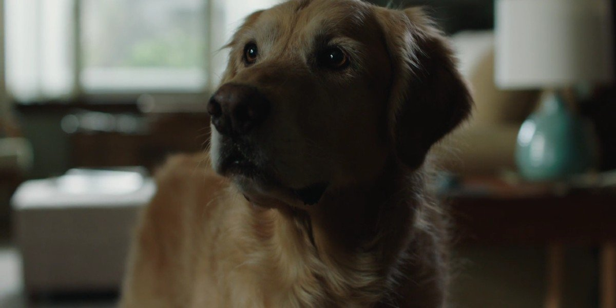 The dog actor who plays Enzo in The Art of Racing in the Rain