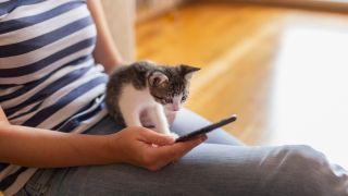 cat apps