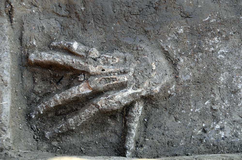 Severed Hands Discovered in Ancient Egypt Palace | Live Science