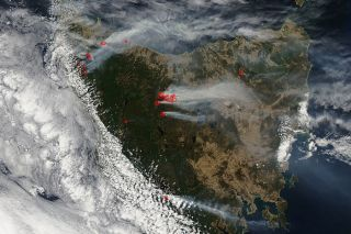 tasmania's bushfires burning Earth's oldest trees