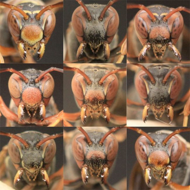 a series of paper wasp close-up shots of their faces