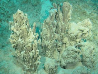 Stromatolite with Well-Developed Branches