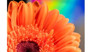 Get creative at home by taking fresh-looking macro photographs of flowers