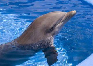 bottlenose-dolphin-11093002