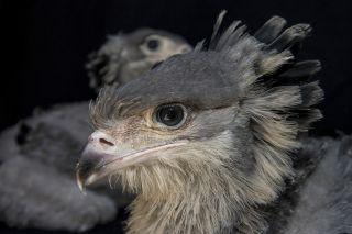 birds, cute baby animals