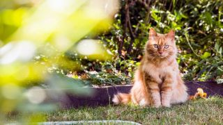cat cooling tips: cool cat down