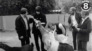 The Beach Boys at the zoo