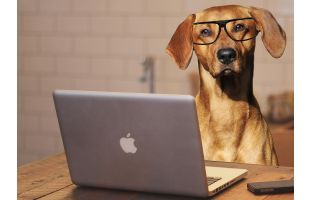 Dog with glasses at open Apple laptop computer