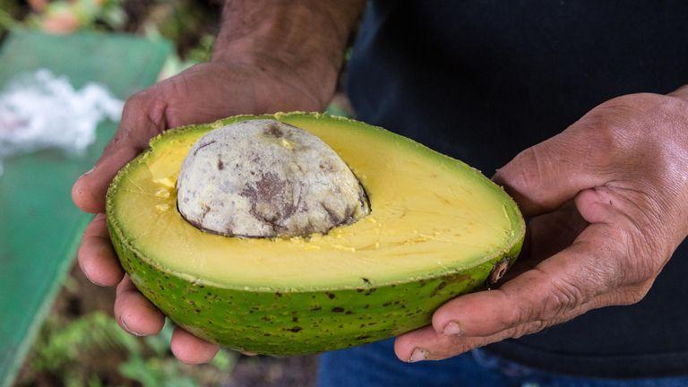 Like the M&S giant avocado