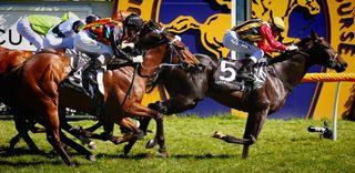 Galloping horses racing