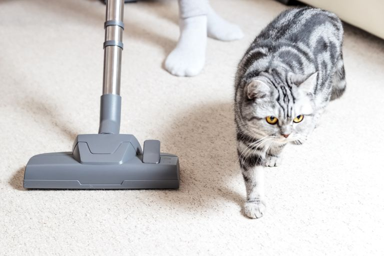 Best vacuum for pet hair guide: cat next to a vacuum cleaner