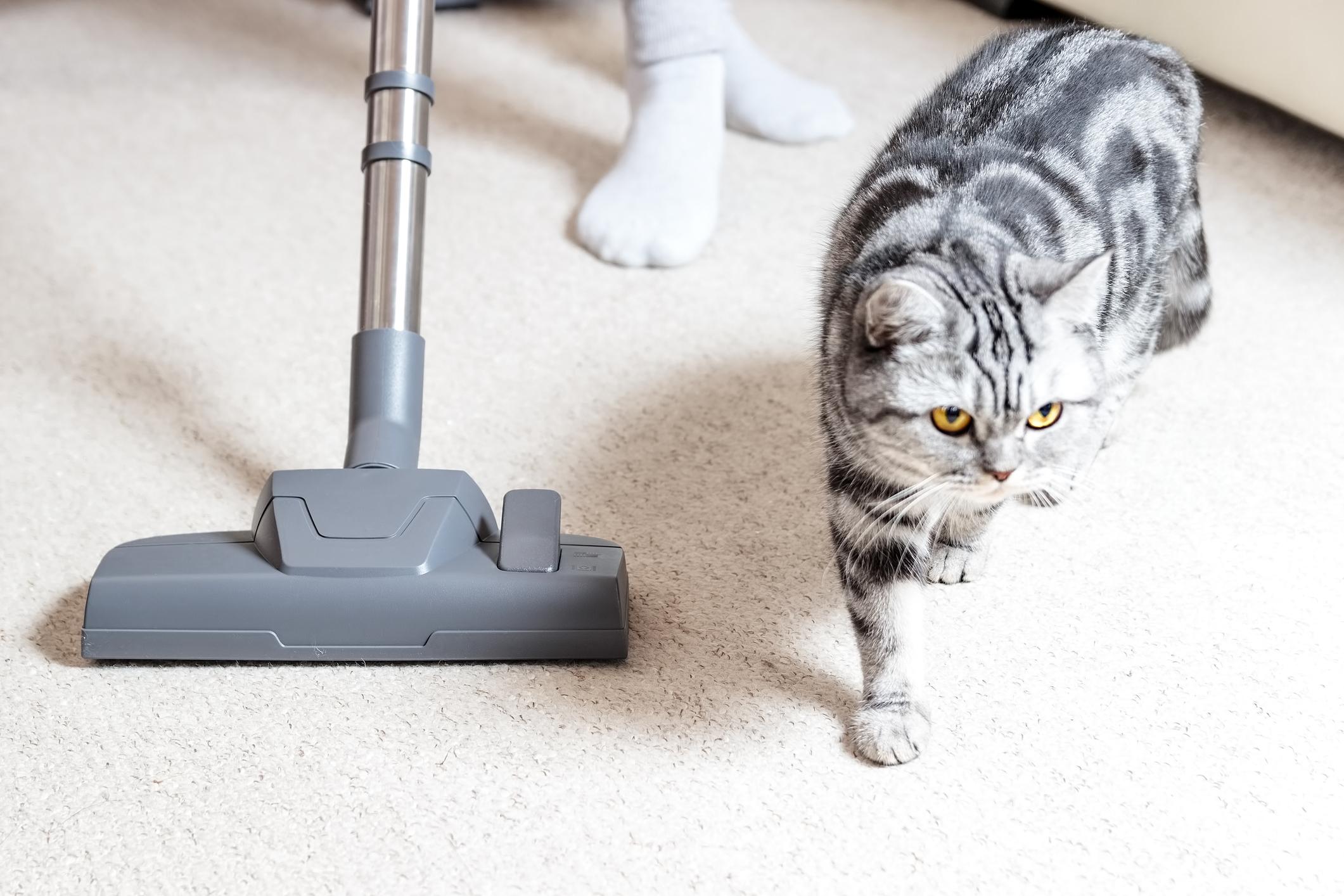 Best Vacuum For Pet Hair 2020 10 Top