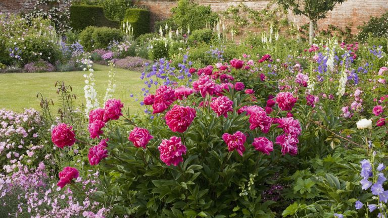 Peonies, bellflower (Campanula) and roses (Rosa) in The Rose Garden at Mottisfont Abbey, UK. Summer