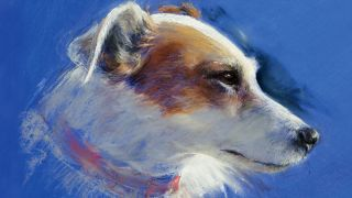 Pastel jack russell dog portrait on a bright blue background