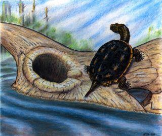 dinosaur, meteor, extinction, kt boundary, K-T boundary, turtle, tough turtles, baenid turtles, mammals.
